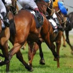 Comment acheter un cheval de course : les critères à surveiller !
