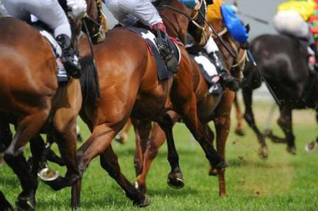 Acheter un cheval de course
